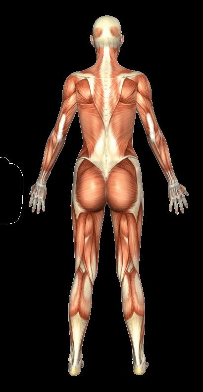 Atlas – Female Back